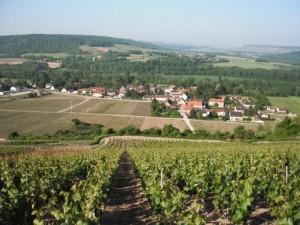 barzy-sur-marne_Champagne_Berjotfils_wikichampagne_Ezio_Falconi